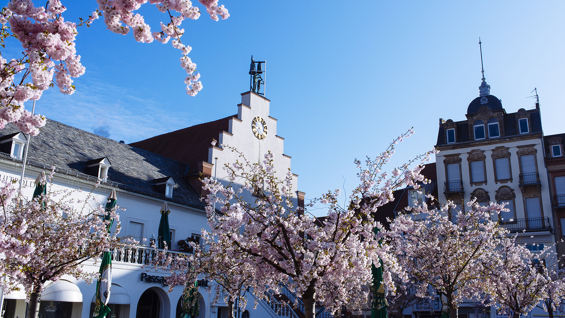 Weinhotel Kienle Umgebung im Frühling